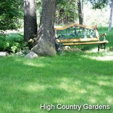 Backyard Grass Ideas The 25 Best No Mow Grass Ideas On Pinterest Mowing Grass No