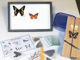 Display Case For Sale Ottawa Butterflies Insects Moths Beetles Gifts And Supplies