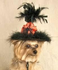 Yorkie Costumes Halloween Pimp U0027n Ain U0027t Easy Yorkies Yorkies Dog Terrier