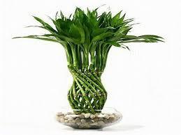 good inside plants good indoor plants good indoor flower plants bloombety indoor