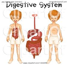 clipart of a medical diagram of a boy with visible digestive