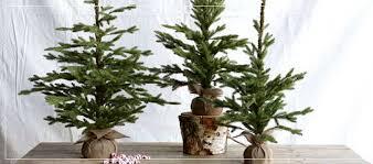 creative co op assorted decorations ornaments