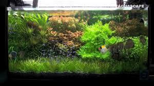 Aquascape Aquarium Designs Aquascaping Aquarium Ideas From Zoobotanica 2013 Pt 4 Youtube