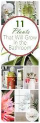 best 25 indoor plant decor ideas on pinterest plant decor