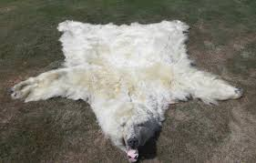 furs for sale hides custom tanning native american made hand