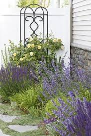 best 25 landscaping plants ideas on pinterest landscaping