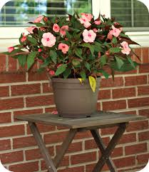 Flower Pot Arrangements For The Patio Best Potted Plants For Patio Home Outdoor Decoration