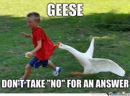 Goose Meme - crazy geese by boom meme center