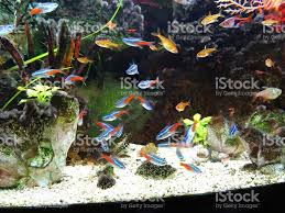 Aquarium Tropical Plants Landscaped Freshwater Tropical Aquarium Fishtank Neontetra Fish