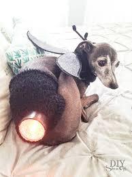 Halloween Dog Costume Diy Lightning Bug Dog Costume Diy Show Diy Decorating