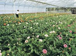 native plants perth commercial flower growing is it for you agriculture and food