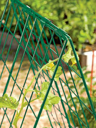 Can Cucumbers Grow Up A Trellis Deluxe Cucumber Trellis Gardener U0027s Supply
