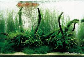Nature Aquascape Driftwood Q U0026a With Takashi Amano