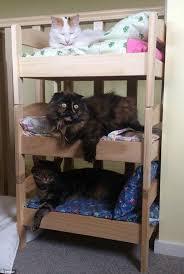 Mini Bunk Beds Ikea 108 Best Catification Images On Pinterest Cat Houses Cat