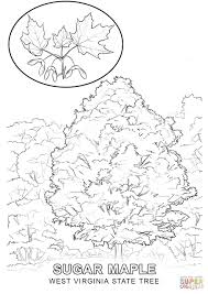 west virginia state tree coloring page free printable coloring pages