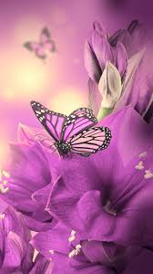 free butterfly backgrounds for android wallpaper wiki