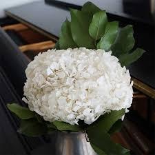 white hydrangeas preserved white hydrangeas