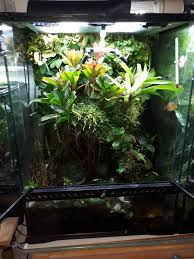 terrarium plants local classifieds buy and sell in the uk and