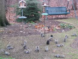 How To Hunt Squirrels In Your Backyard by Feeding Birds Feederwatch