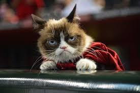 Meme Grumpy Cat - why you ll love the tard the grumpy cat meme