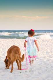 101 best pet friendly beaches images on pinterest dog beach dog