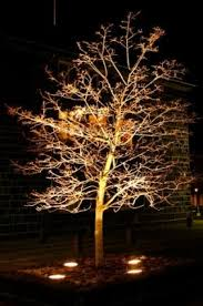 Landscape Tree Lights Outdoor Landscape Lighting Ideas Lovetoknow