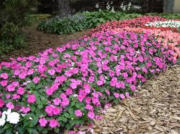 cura giardino fiori da giardino blazondentalmarketing