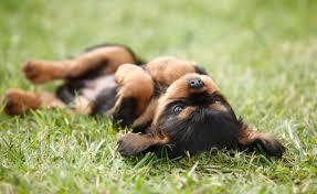 Tierarzt Bad Wildungen Gelenktherapie Warum Gold Den Schmerz Nimmt Dogs U2013 Europas