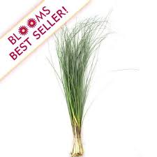 grass greenery wholesale blooms by the box