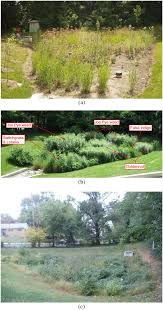 Maryland vegetaion images Vegetation and media characteristics of an effective bioretention jpg