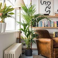 plants at home 8 best air purifying plants for your home houseplants uk