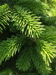 natureplus help to identify this tree