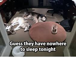 Grumpy Cat Sleep Meme - guess they have nowhere to sleep tonight grumpy cat meme on me me