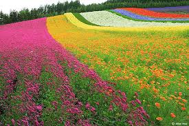 Colors Of The Wind A Poem Writerscafe Org The Online Writing