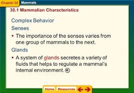 chapter 30 mammals section 1 mammalian characteristics ppt download