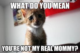 Mean Kitty Meme - what do you mean you re not my real mommy sad kitty quickmeme