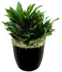 Small Desk Plants by Office Plant Rentals In Toledo Ohio