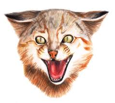 gato colo colo colo colo cat by highdarktemplar on deviantart