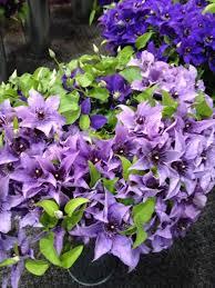 188 best flower identification images on pinterest flower beds