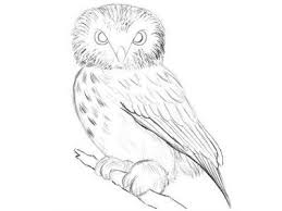 how to draw an owl easy drawing of an realistic owl st