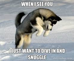 Snuggle Meme - when i see you i just want to dive in and snuggle my feelings