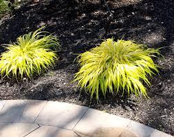 ornamental grasses basics landscpaing co inc