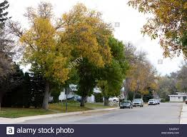 canadian homes tree lined suburban street with single storey canadian homes stock