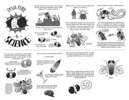 Zine Template by The Small Science Collective Fruit Flies The Workhorses Of Science