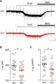developmental disruption of gabaar meditated inhibition in cntnap2