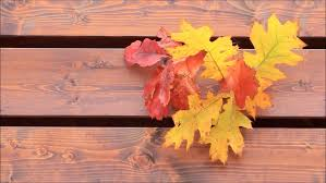 wooden leaves wall background brown wooden wall with autumn leaves stock footage