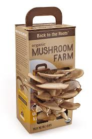 mushroom u0026 cheese making kits u2013 extended seasons indoor gardening