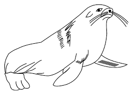 animal and marine life coloring pages