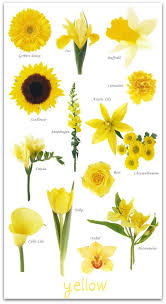 Spring Flower Pictures Best 25 Yellow Flowers Names Ideas On Pinterest Yellow Flowers