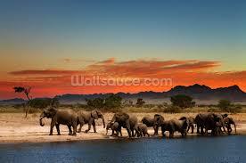african elephants wallpaper wall mural wallsauce african elephants wall mural photo wallpaper